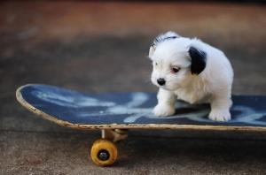 awesome-cute-dog-fuckhard-puppy-Favim.com-135966_large